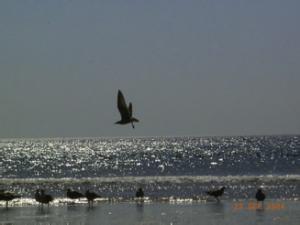 hemelvaart vogel