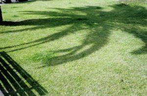 Palm met schaduw